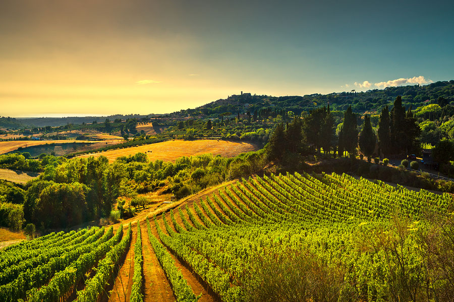 vineyards and countryside landscape at sunset